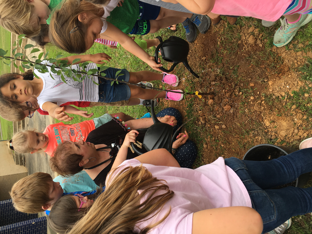 K5 Students Plant an Arkansas Black Apple Tree