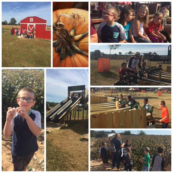 Collage of 2nd grader at the Pumpkin Patch