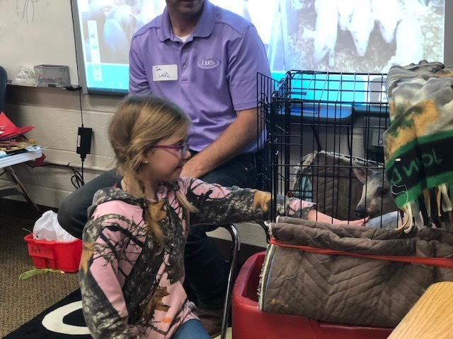 Student petting a piglet